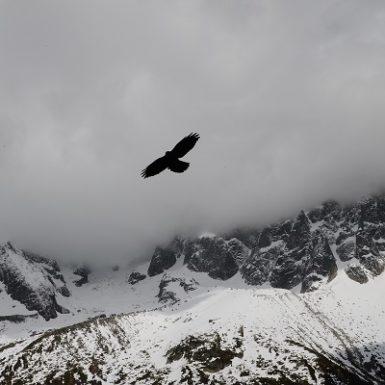 Visión de águila volar Mónica H. Rosety Masajes Otros